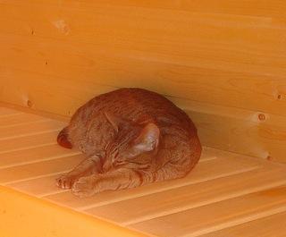 sauna-cat