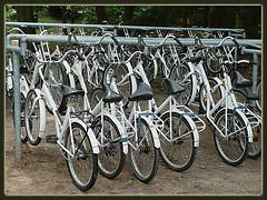 white-bikes