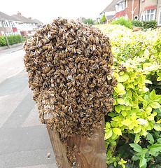 Swarmofbees