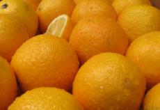 Oranges-Branko1